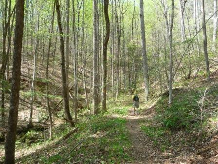 Along the Ashmore Heritage Preserve Trail