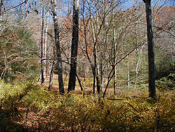 Open Areas along Bradley Creek Trail