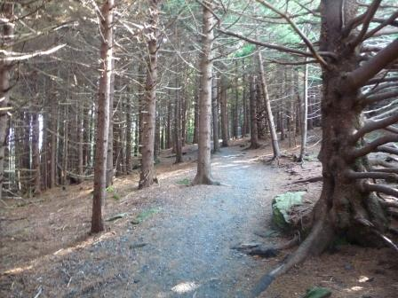 First part of hike goes thru a thick, conifer forest