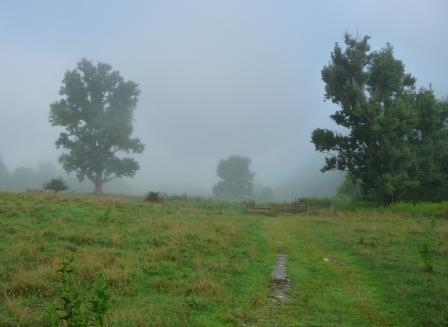 Early Morning Fog along Overmountain Trail