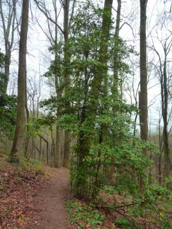 View along the Chestnut Ridge Heritage Preserve Trail