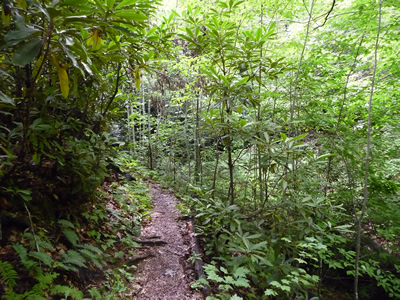 Coontree (Coon Tree) Trail in Pisgah National Forest