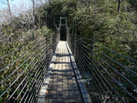 Swinging Bridge Directly over Raven Cliff Falls